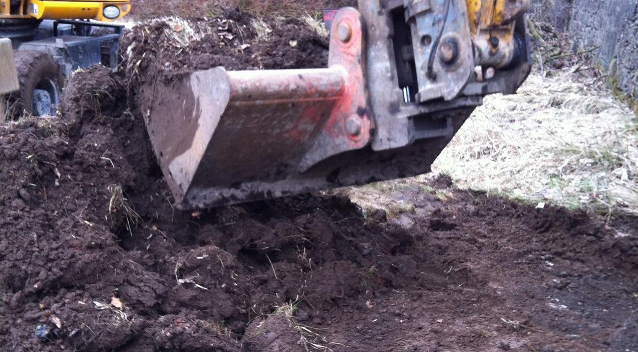 Excavating Japanese Knotweed