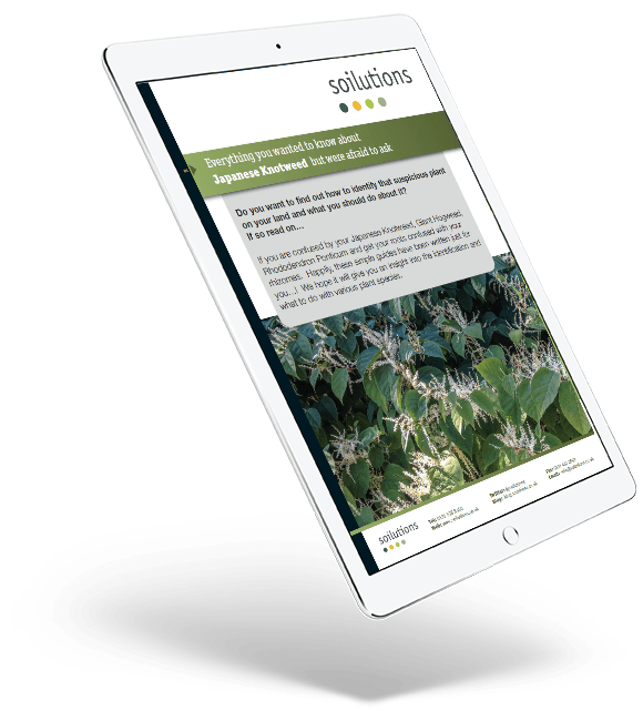 Japanese Knotweed eBook