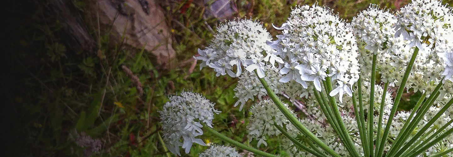 giant-hogweed-slide-04
